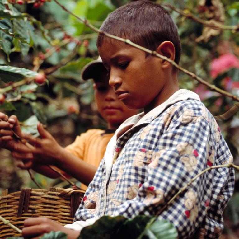 2017-09-child-labour