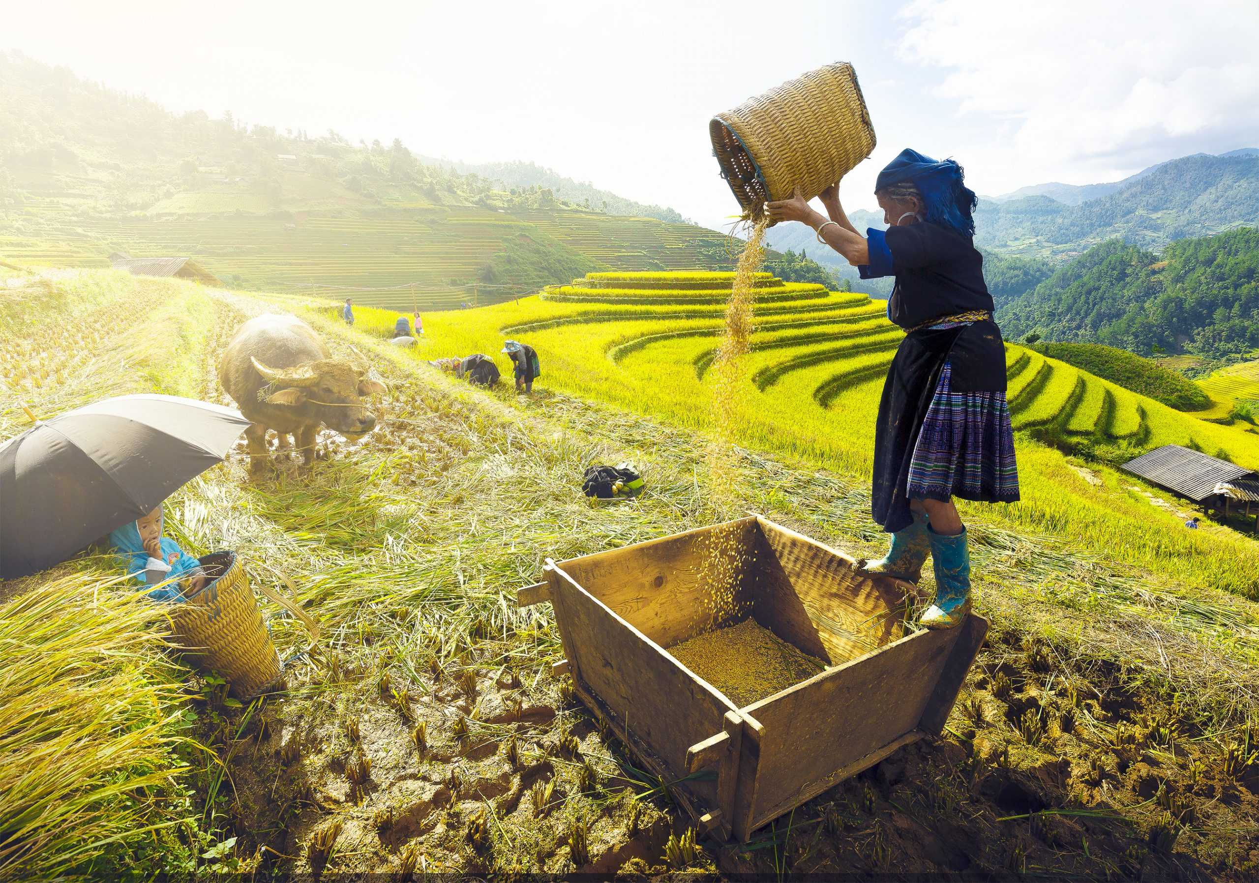 nainen pellolla vietnamissa