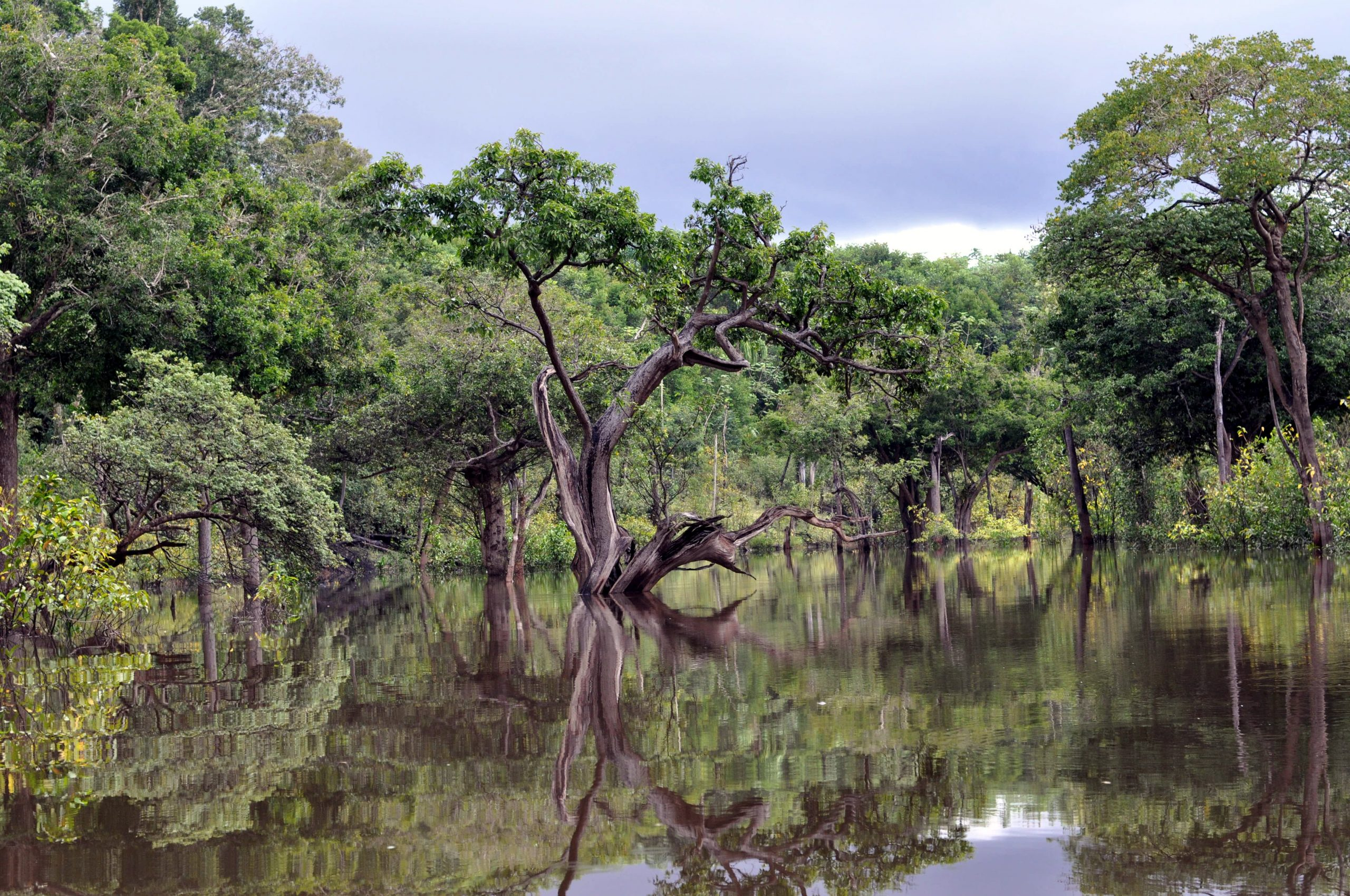 Brasilian sademetsää