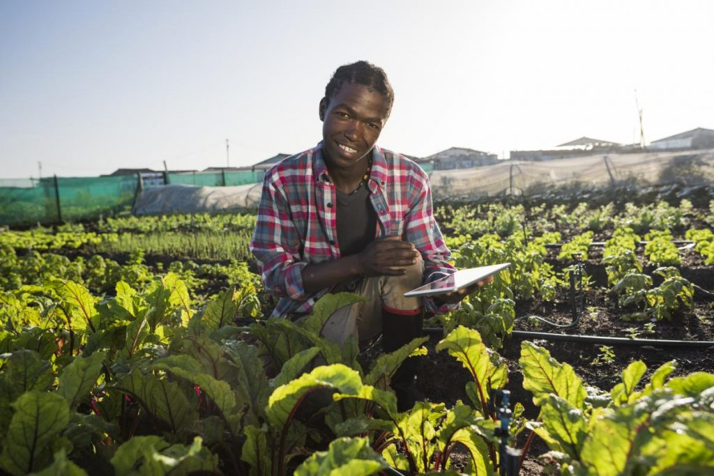 A morning backlit image of a young African male in his vegetable garden, he sits on his haunches holding a tablet while smiling at the camera.