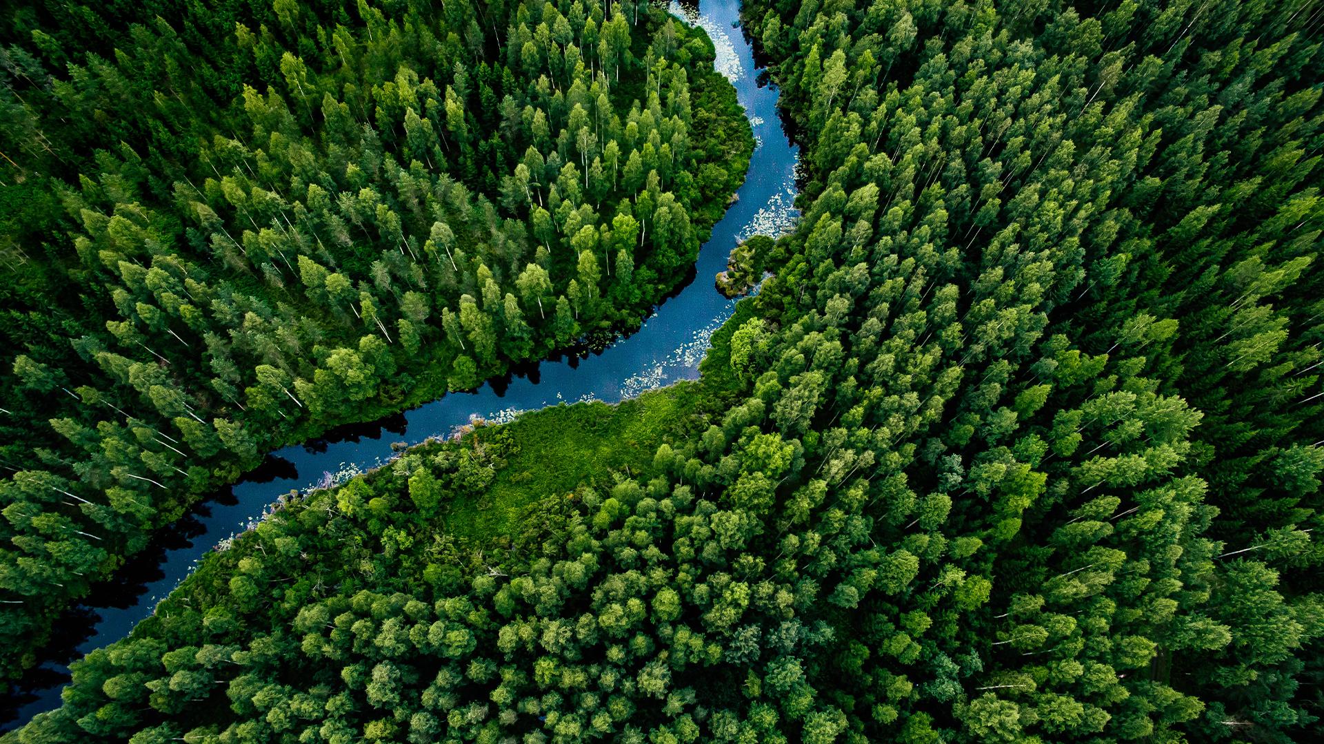 Joki kulkemassa metsän läpi.