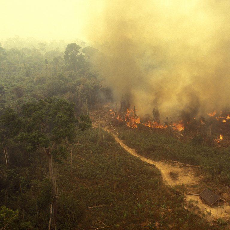 Metsäpalo